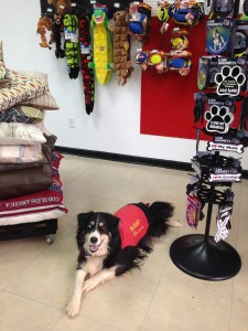 Toy, Magnets and Pet Beds are just a few things in the bone-tique!