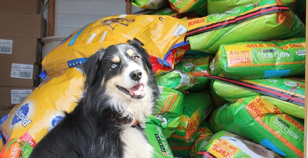 """You Buy Dinner, I'll Drive…"" A food drive for Lancaster County (SC) Animal Control…our most successful to date!"