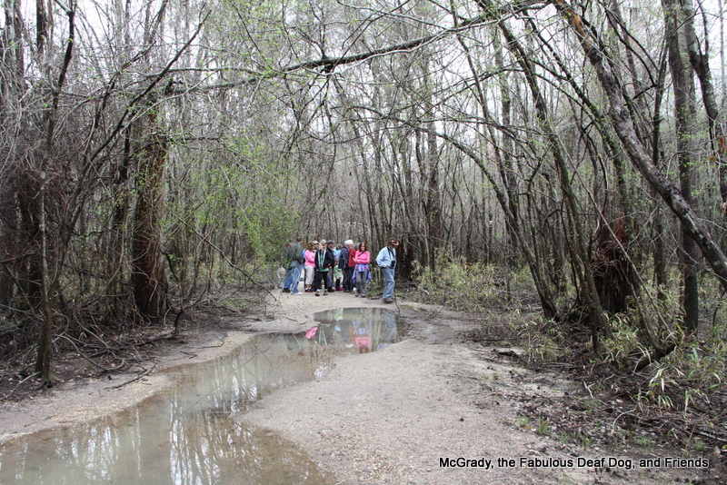 Follow Our Leash ToCongaree National Park Fabulous McGrady and