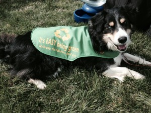 "McGrady's custom ""It's EASY Being Green"" Recycling Vest by My Dog Flair"