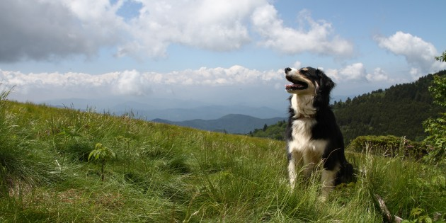 Follow Our Leash to….Roan Highlands, Roan Mountain TN