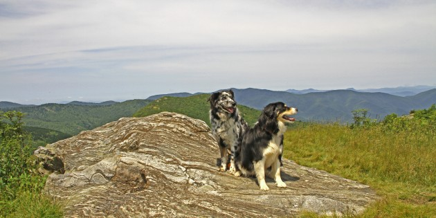 Follow Our Leash To….Graveyard Fields via Black Balsam (Blue Ridge Parkway)