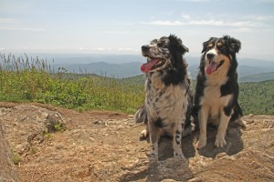 Sydney & McGrady atop Black Balsam Knob