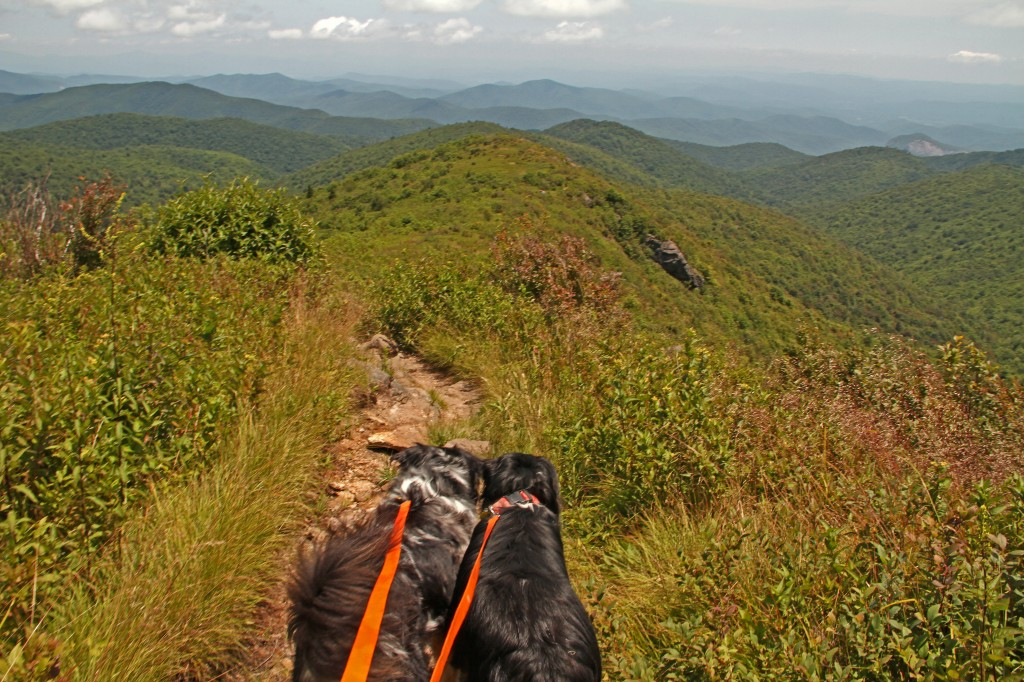 Sydney & McGrady heading down to Graveyard Fields from atop Mount Tennent