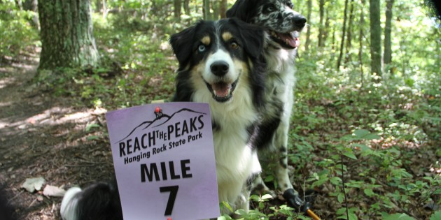 "Follow Our Leash to….Hanging Rock State Park's ""Reach the Peaks"" Hiking Challenge"