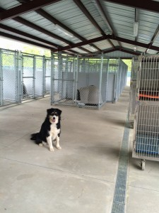 McGrady in front of the kennel runs and cat cages that are being prepared to receive their furry guests!
