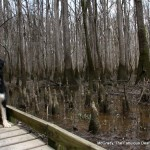 McGrady on the Low Boardwalk at Congaree National Park, March 2014